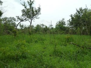Site for Ibba Girls School buildings